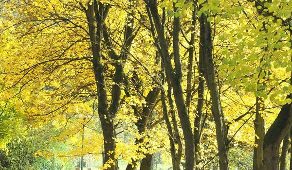 Paderborn - Park